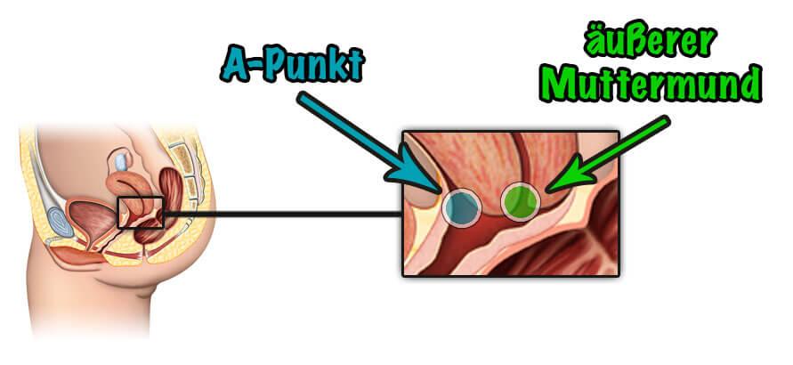 anatomische Bild